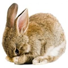 Muursticker farm family baby konijn