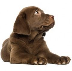 Muursticker farm family puppy
