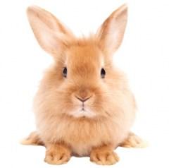 Muursticker farm family konijn