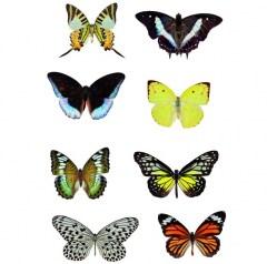 Muursticker zoo family vlinders